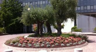 Aiuola Comune San Benedetto