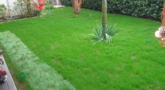 San Benedetto  del Tronto - manutenzione giardino privato