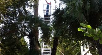 San Benedetto del Tronto - manutenzione giardino villa storica