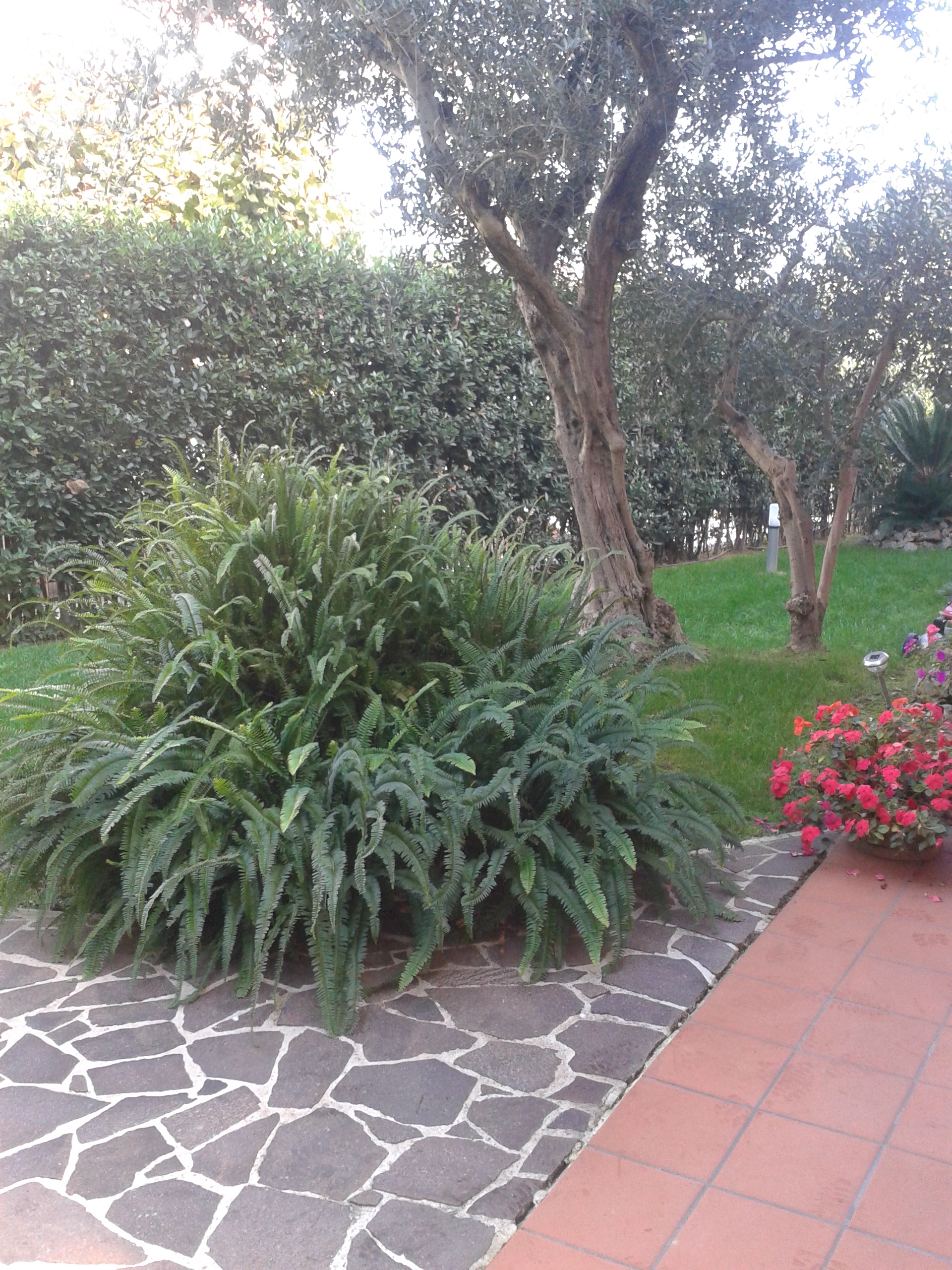 Manutenzione giardini marche for Manutenzione giardini
