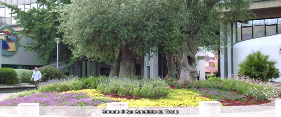 Progettazione e creazione aree verdi > comune di san benedetto del tronto